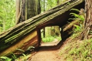 Exploring the red woods!