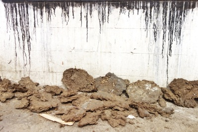 Cow dung, India 2013.