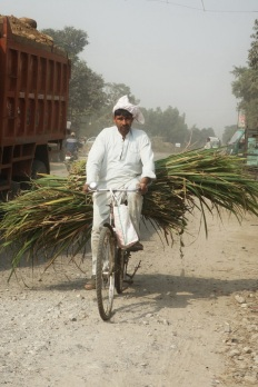 Cyclist, India 2013.