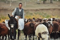 We really love the shepherds as they too understand our nomadic ways, eastern Turkey 2014.