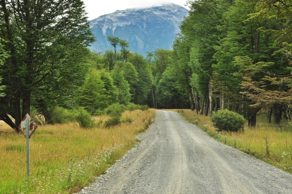 The beautiful forested road.