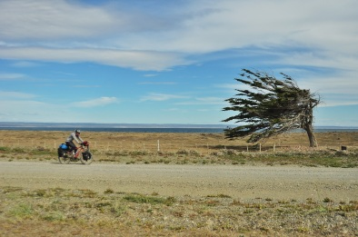 This is the typical photo that every touring cyclist seems to have from this region, and for good reason, as this tree really shows how windy this region is.