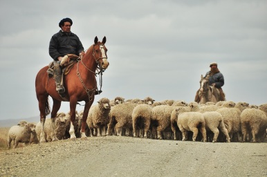 These two cow boys had their hands full with their thousands of sheep, Tierra del Fuego 2015.