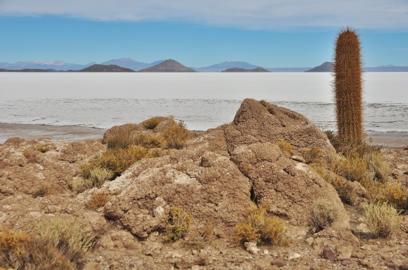 The island was covered with cacti.