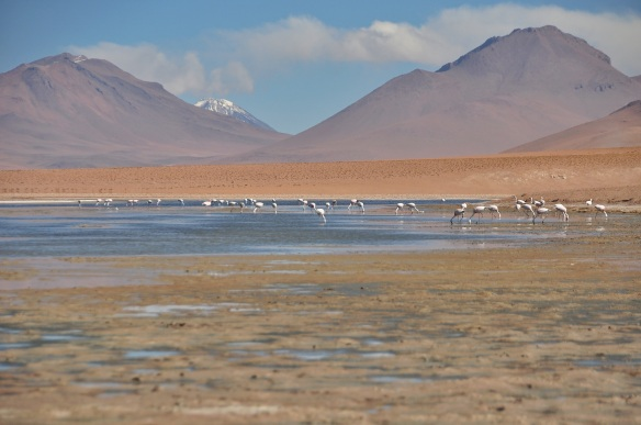 There are many flamingos through the area.