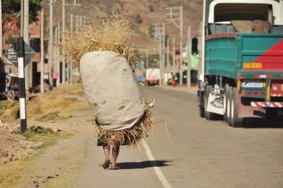 We often see people carrying large bags of different things, in this case hay, on their shoulders.