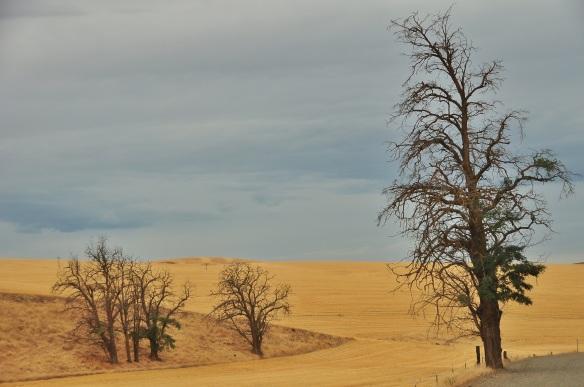 Eastern Oregon.