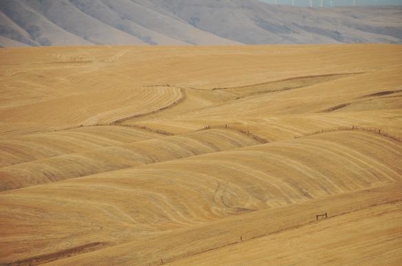 Rolling hills of hay.