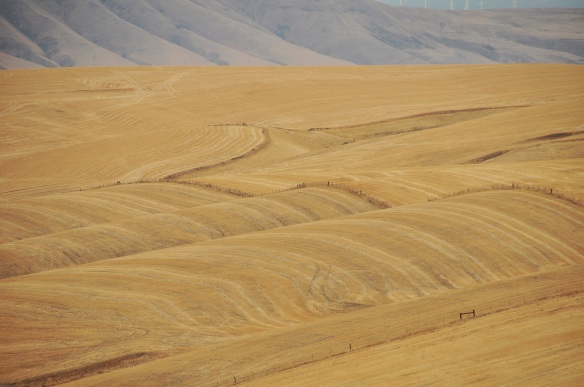 Rolling hills of hay.