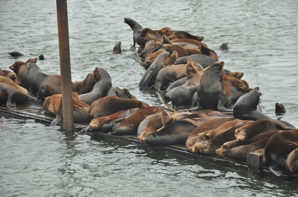 The sea lions are a nuisance as they ruin the docks but they sure are fun to watch.